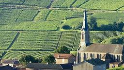 Burgundy Wine Club (Whites & Reds)